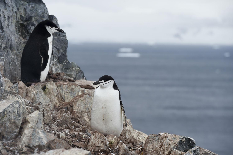Antarctica-environment-tourism