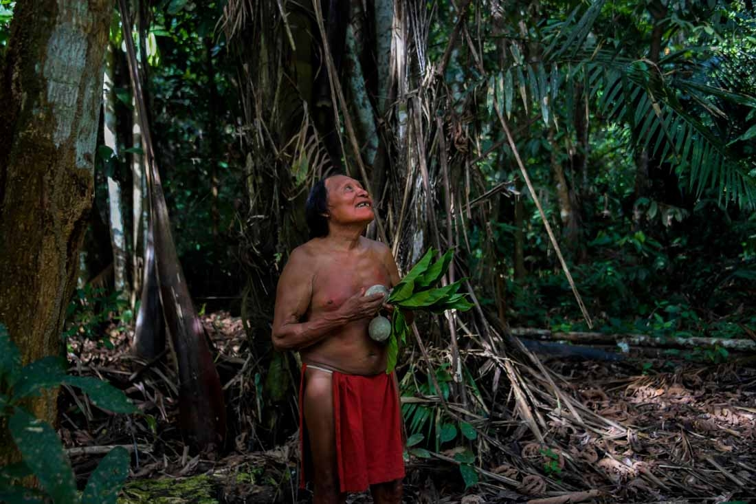 A Waiapi man looks at a boy picking fruits from a Geninapo tree at the Waiapi indigenous reserve in Amapa state in Brazil on October 13, 2017.  When Waiapis walks into the Amazon forest surrounding their village, they do not see trees, but a kind of shopp