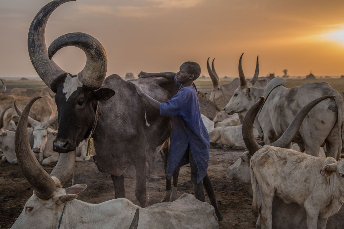 ASudanese boy from Dinka tribe tends a cow in the early morning at their cattle camp in Mingkaman, Lakes State, South Sudan on March 4, 2018.