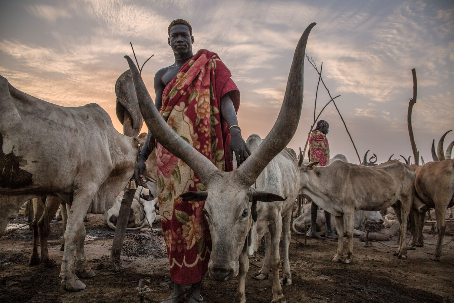 A Sudanese man from Dinka tribe poses between cows in the early morning at their cattle camp in Mingkaman, Lakes State, South Sudan on March 4, 2018.