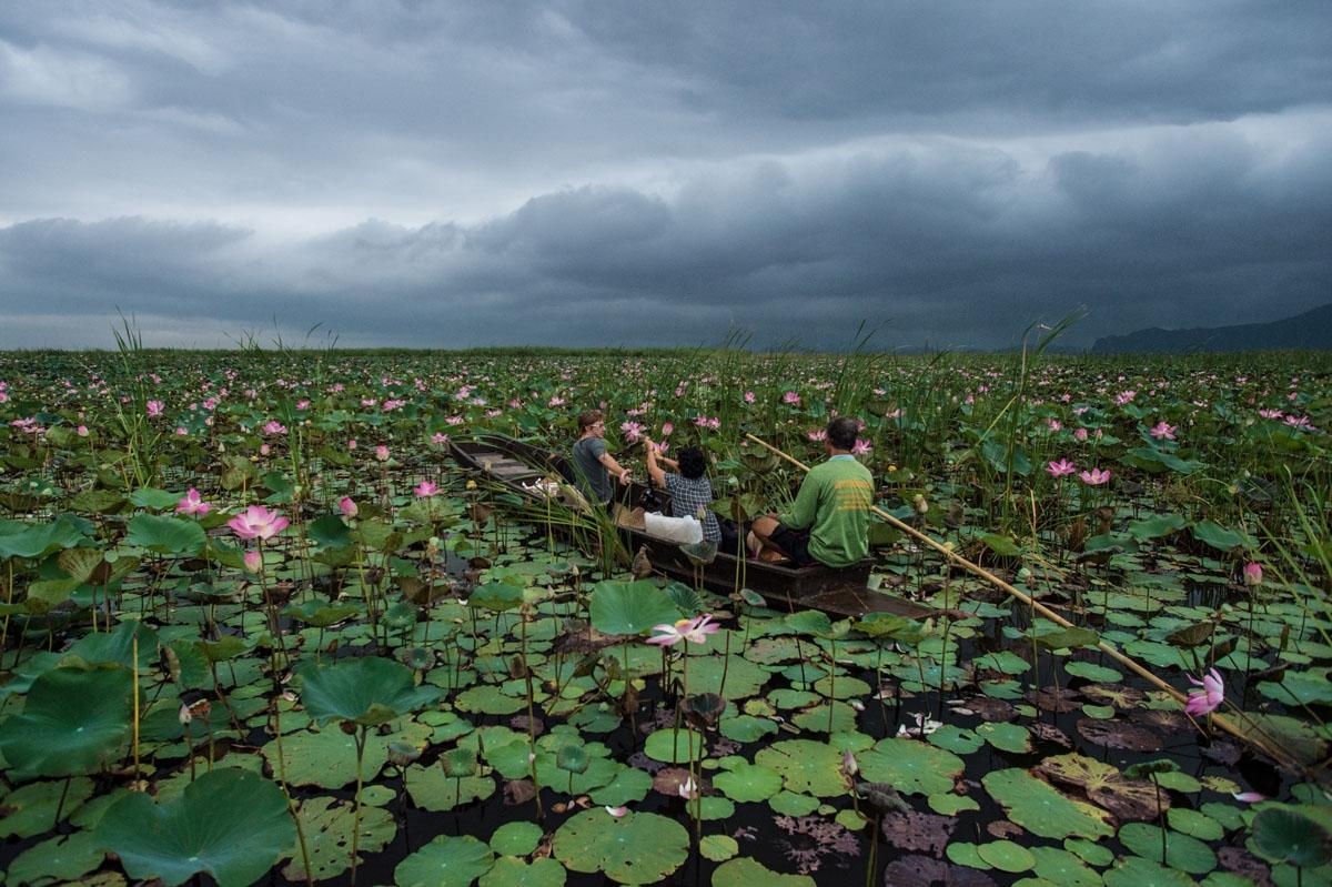 The sacred lotus correspondent afp roberto schmidt izmirmasajfo Images